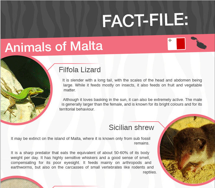 The animals of Malta - a fact file