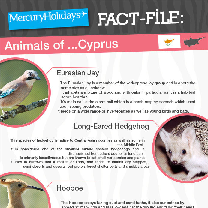 Animals of Cyprus - a fact file