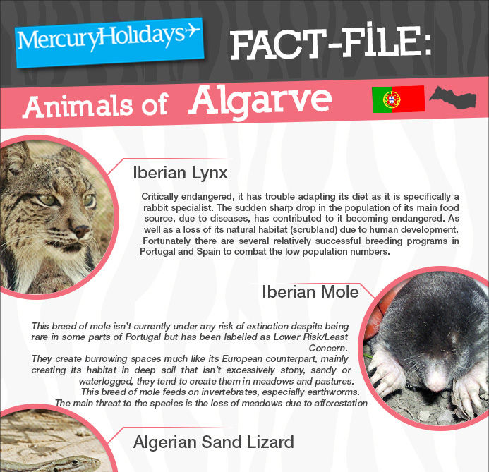 Animals in the Algarve - a fact file