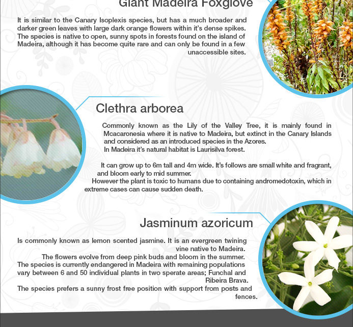 Flowers of Madeira fact file