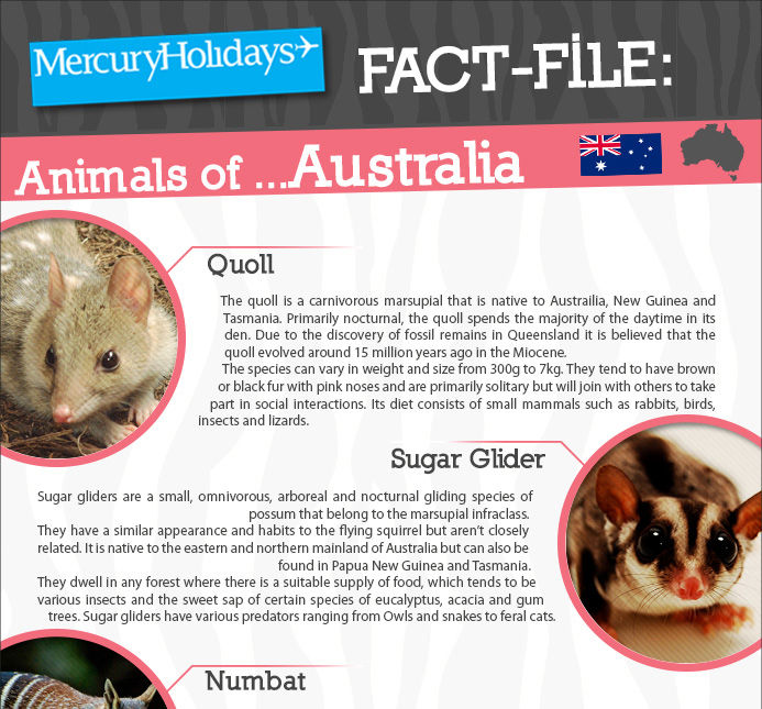 The animals of Australia - a fact file