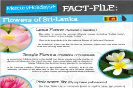 Flowers of Sri Lanka - a fact file