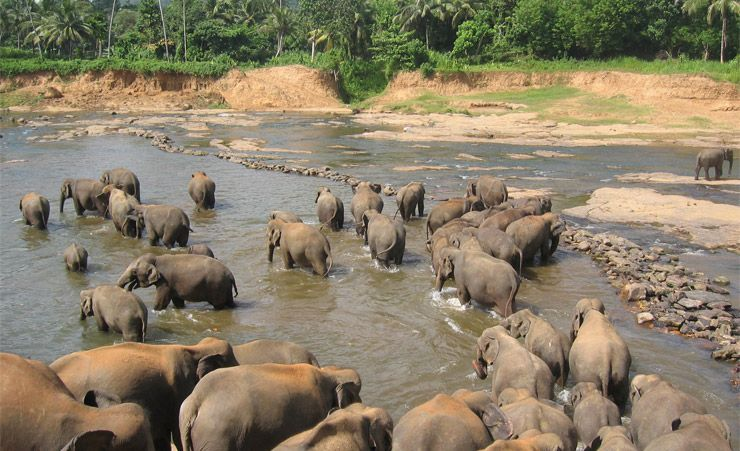 """Pinnawela Elephant Orphanage"""