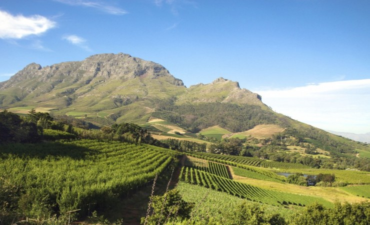 """Stellenbosch Wine Estate"""