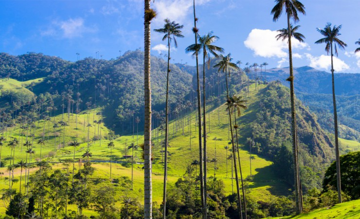 """Cocora Valley"""