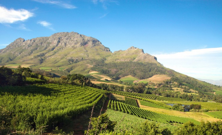 """Stellenbosch Cape Winelands"""