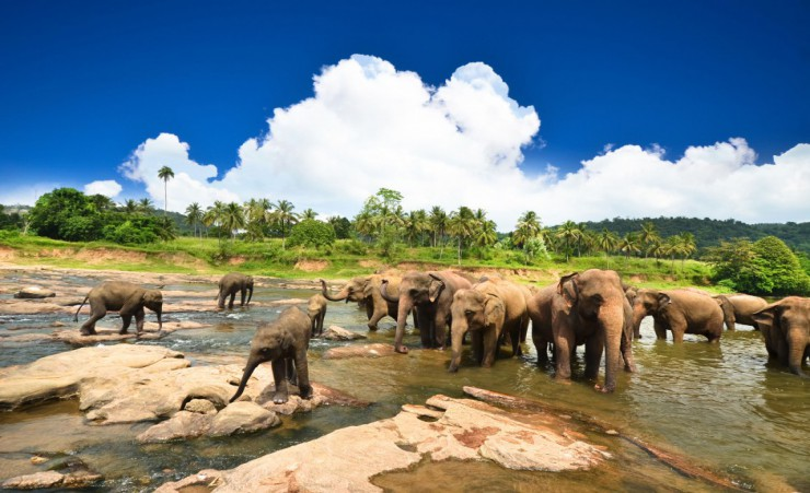 """Elephants   Yala National Park"""