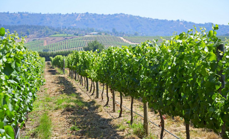 """Casablanca Valley Vineyard"""