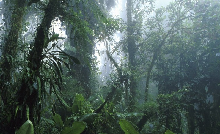"""Vegetation In The Cloud Forest Reservation"""