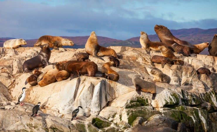 """Seal Island In The Beagle Channel"""