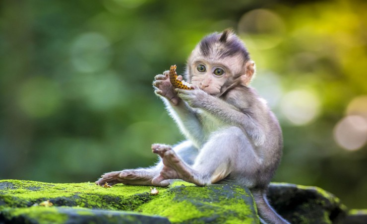 """Ubud Monkey Forest"""
