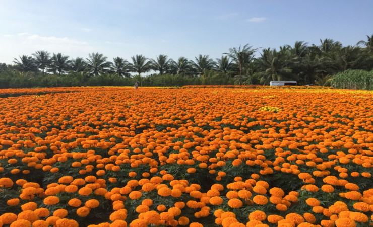 """Flower Plantation At Sa Dec"""