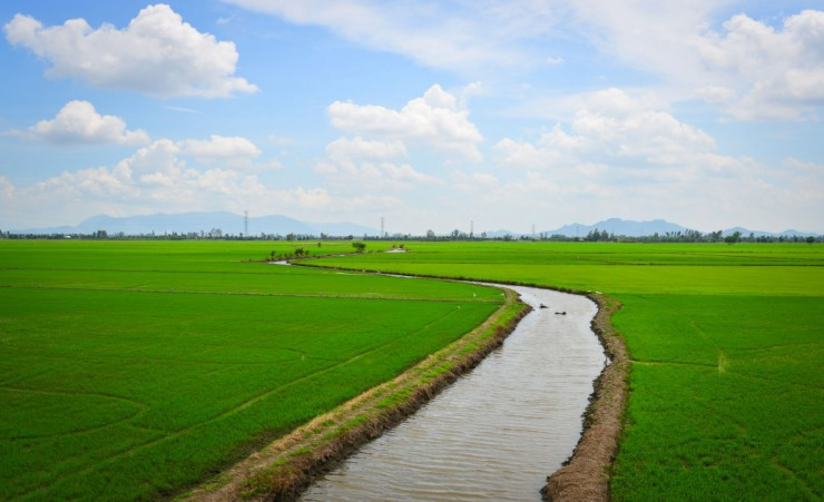 """Rice Fields Near Chau Doc"""