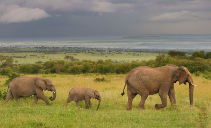 """Masai Mara Elephants"""