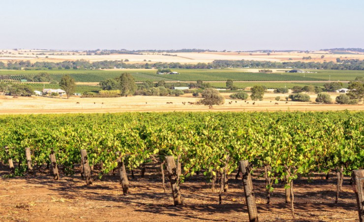 """Barossa Valley 85607277_M"""