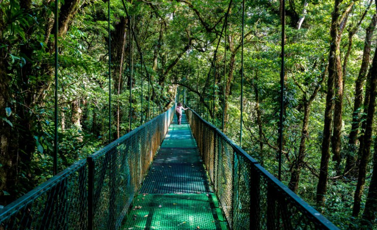 """Cloud Forest Monteverde"""