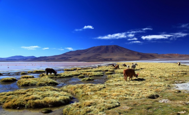 """Laguna Colorada (Red Lagoon), Bolivia"""