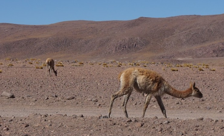 Chile Bolivia And Peru Amp Amazon Adventure Tour Mercury Holidays