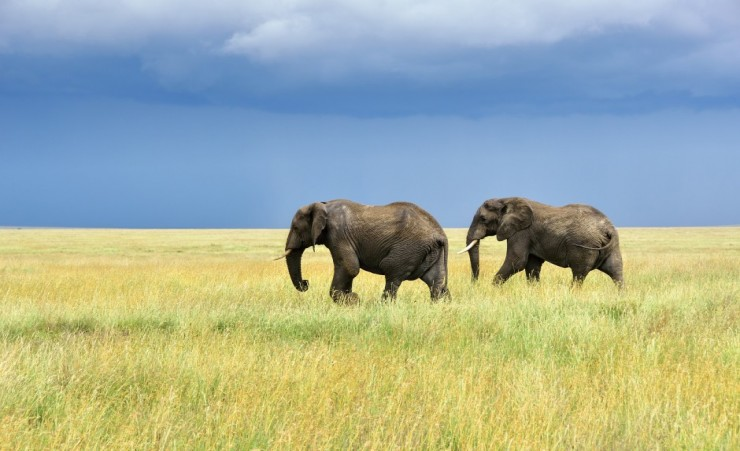 tour tanzania escorted