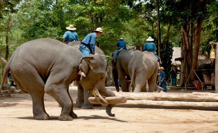 """Elephant Conservation Center Lampang"""