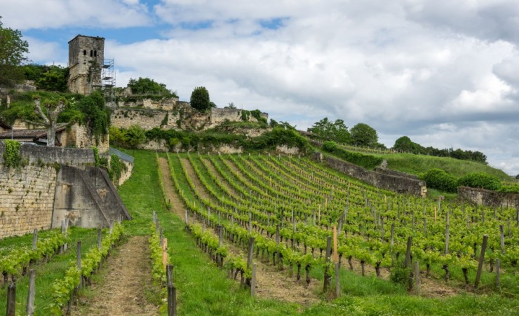 """Vineyards Of Saint Emilion"""