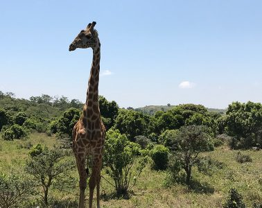 A to Z of a Tanzania Tour